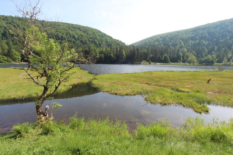 17-06-2021 - Lac tourbière de Blanchemer La Bresse (c) R. François