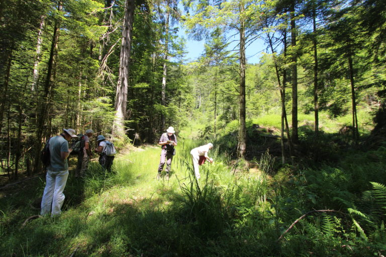 14-06-2021 - Ru à Drosera rot & Carex echinata & canescens Moussey (c) R. François