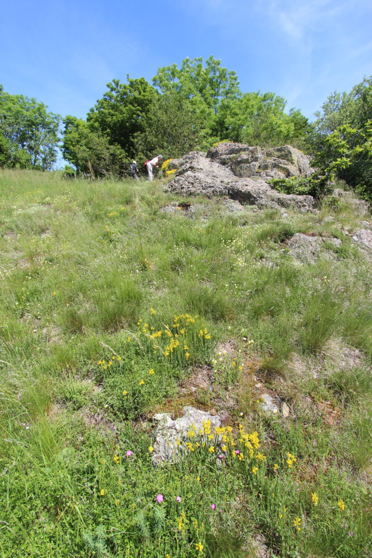15-06-2021 - SLNP au Freundstein à Goldbach (c) R. François